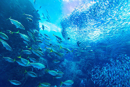 Blue Sea with Fish