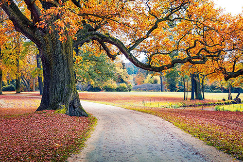 An Autumn day in europe