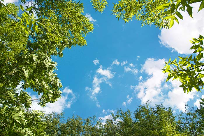Forest tree with Clouds