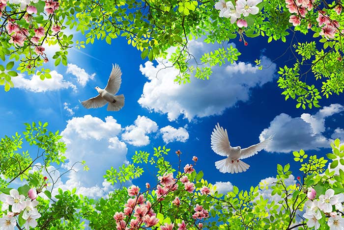 dark Blue sky with birds and trees