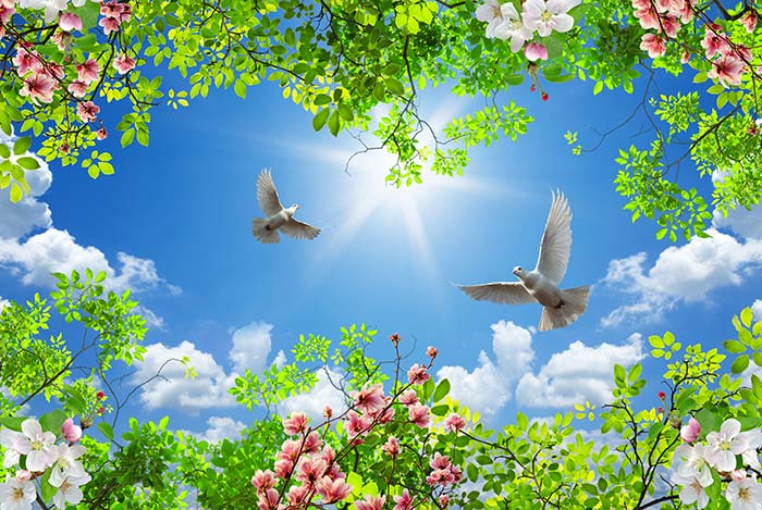 Bright Sky with Birds and Clouds
