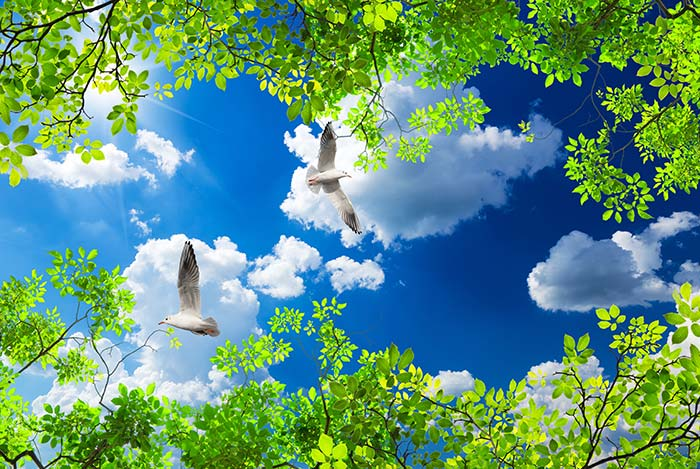 Bright Green Trees With sky view