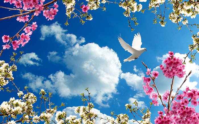 Pink and white flower with bird in sky