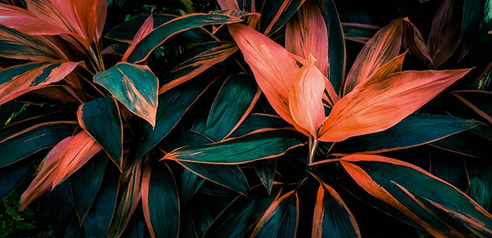Green and Orange Leaves