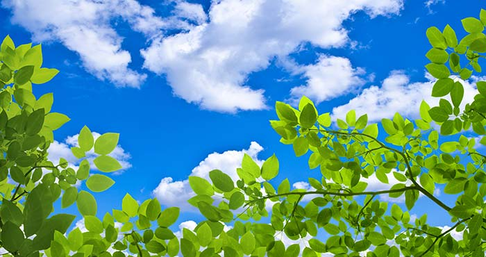 Small Plants with sky view