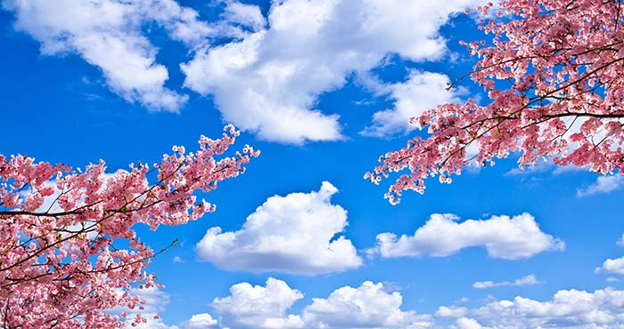Pink Plant in sky