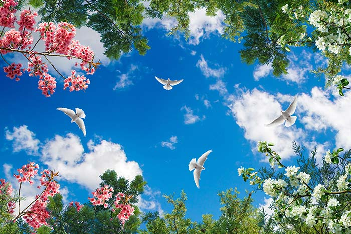 Trees and Flowers with sky view