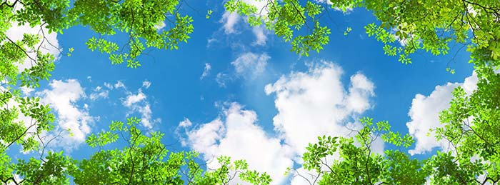 Clouds in sky with Green trees