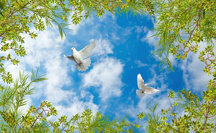 Clouds and sky with birds