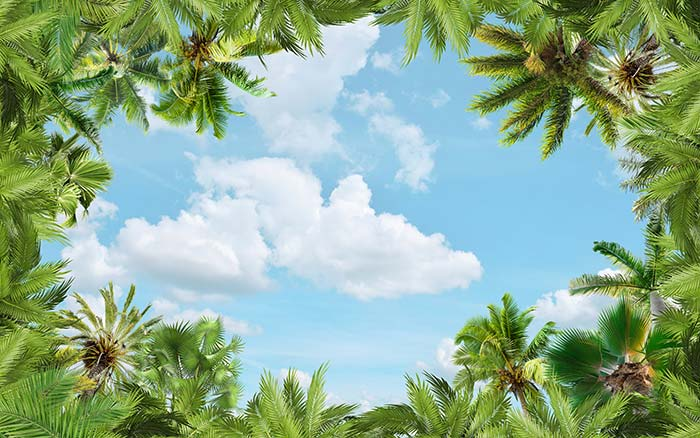 tropical Trees with sky view