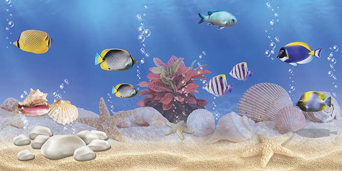 Fishes and Molluscs
