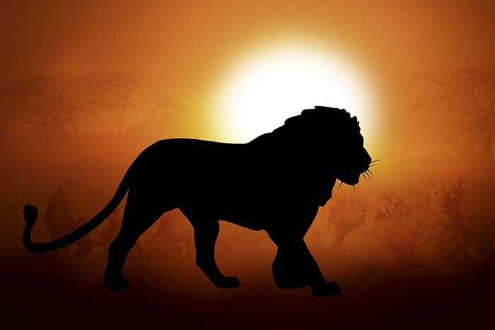 Evening scene with lion shadow